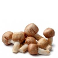 Un fungo contro le malattie degenerative